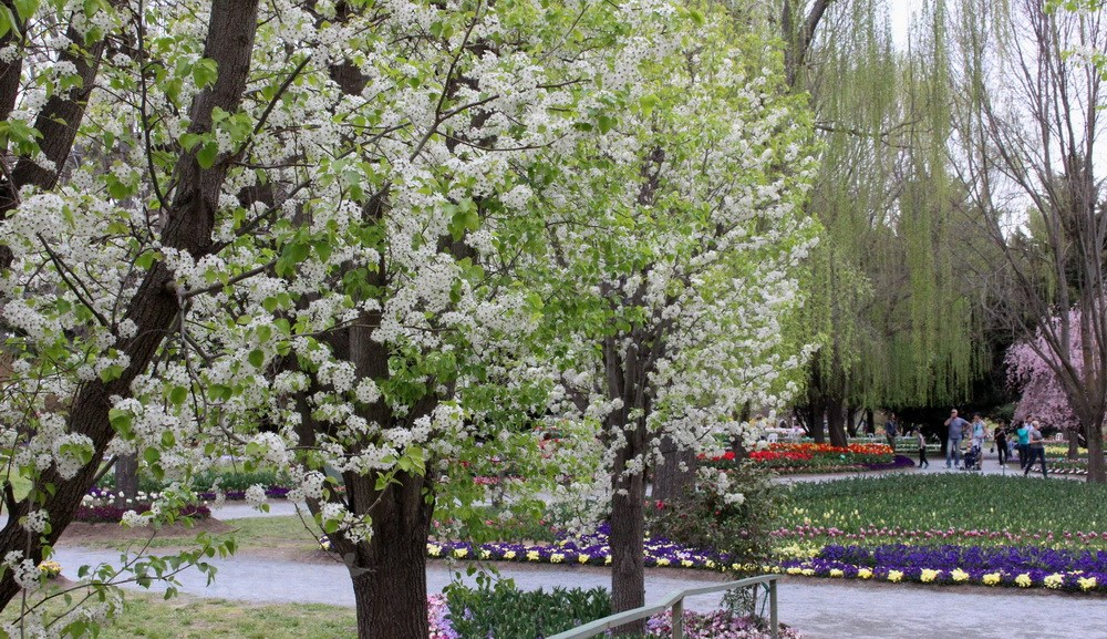 Úc: Ngắm sắc hoa Xuân rực rỡ tại Tulip Top Gardens