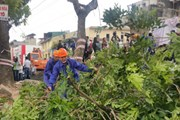 Bắt đầu di chuyển, cắt tỉa 1.289 cây xanh trên phố Phạm Văn Đồng