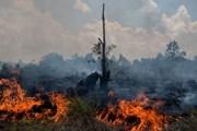 Indonesia ban bố tình trạng khẩn cấp do cháy rừng đang lan rộng