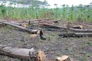 [Video] Kiến nghị thu hồi dự án rừng thông ven quốc lộ 28