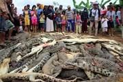 Đám đông tàn sát 300 con cá sấu để trả thù cho người thân bị chết