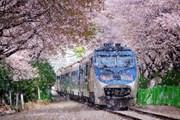 Bay đến Hàn Quốc với giá ưu đãi, nhận vé tham quan thành phố miễn phí