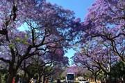 Du lịch tâm linh và ngắm hoa Xuân hút du khách đầu năm mới
