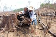 Quảng Nam: Khởi tố bị can trong vụ phá rừng tại Tiên Lãnh