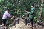 Kon Tum: Phá rừng, nguyên trưởng công an xã Đăk Ui bị khởi tố