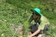 ASEAN-Trung Quốc-UNDP hợp tác thực hiện mục tiêu phát triển bền vững