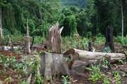 Nghệ An: Khởi tố, bắt tạm giam 2 trạm trưởng quản lý bảo vệ rừng