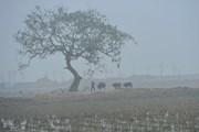 Các khu vực trên cả nước đều có mưa, sáng sớm có sương mù