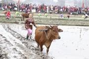 Sôi động Lễ hội xuống đồng Xuân Mậu Tuất ở tỉnh Thái Nguyên
