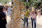 [Photo] Trưng bày nhiều loại lan quý hiếm tại Ngày hội hoa lan