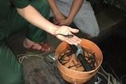 Quảng Ninh: Tiêu hủy 5.000 con cá giò giống nhập lậu từ Trung Quốc