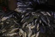 Xác định nguyên nhân dẫn đến cá chết hàng loạt trên sông La Ngà