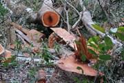 Quảng Ninh kiểm tra, làm rõ vụ 8ha rừng phòng hộ bị chặt phá