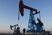 Giá dầu châu Á giảm do OPEC và Nga cân nhắc tăng sản lượng