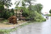 Hà Nội yêu cầu hạn chế tối đa tình trạng gãy đổ cây trong mùa mưa bão