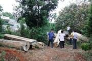 Gia Lai: Khiển trách 3 nhân viên để xảy ra tình trạng phá rừng