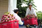 Xây dựng vùng nguyên liệu trái cây: Giữ vững thị trường nội địa