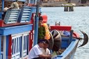 Cơ hội, thách thức của ngành khai thác hải sản: Bài học từ 'thẻ vàng'