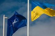 NATO tái khẳng định tăng cường hỗ trợ cho Ukraine và Gruzia