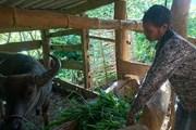 Hệ lụy xuất cảnh trái phép đi làm thuê: Cần tạo việc làm cho người dân
