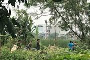 Hà Nội: Phát hiện thi thể đang phân hủy trong bụi chuối ở Nam Từ Liêm