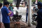Hà Nội: Một cây Sưa đỏ bị cưa trộm trong đêm mưa bão