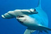 Ecuador bắt giữ tàu cá Trung Quốc chở động vật biển quý hiếm