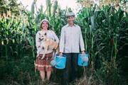 ''25 năm gắn bó cánh đồng'': Không gì đẹp hơn sự giản dị của tình yêu