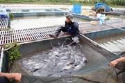 Cần Thơ và bang Maranhão của Brazil hợp tác trong lĩnh vực thủy sản