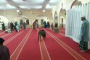 Lợn rừng tấn công nhà thờ Hồi giáo ở Malaysia, một người bị thương