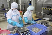 EU mong Việt Nam biến các cam kết khai thác thủy sản thành hành động