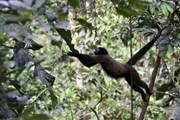 Wild Edens - dự án độc đáo cảnh báo mối đe dọa với hệ sinh thái