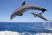 Phát hiện xác hai con cá heo dạt vào bờ biển Thanh Hóa
