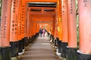 Chiêm ngưỡng ngôi đền cổ nghìn cổng Fushimi Inari ở Nhật Bản