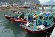 Quảng Ninh bắt giữ 7 tàu vỏ gỗ khai thác thủy sản trái phép