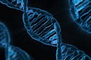 Các nhà khoa học Italy đạt bước tiến lớn trong công nghệ chỉnh gen
