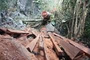 Gia Lai điều tra làm rõ vụ khai thác gỗ trái phép tại đồi Chư Jú