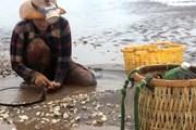 Trà Vinh lập tổ công tác trấn áp hoạt động khai thác cát trái phép