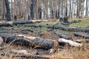 Gia Lai kỷ luật nhiều cán bộ cấp huyện, xã do để lâm tặc phá rừng