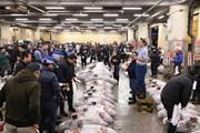 Chợ cá lớn nhất thế giới tại Nhật Bản tạm ngừng đón du khách
