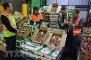 Gần 74% giá trị xuất khẩu rau quả của Việt Nam hướng sang Trung Quốc