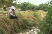 Điều tra nguyên nhân khiến cá chết hàng loạt tại Quảng Ngãi
