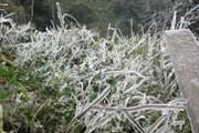 Điện Biên nhiệt giảm sâu, xuất hiện băng mỏng trên vùng cao Tủa Chùa