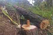 Bắt tạm giam chủ tịch UBND xã vì để xảy ra chặt phá rừng