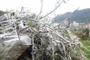 Miền núi phía Bắc khẩn trương phòng ngừa băng giá và sương muối