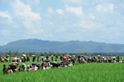 Bangladesh hoãn hồi hương người tị nạn Rohingya về Myanmar