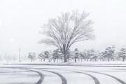 Tuyết rơi dày nhất tại Tokyo trong 4 năm qua, 16 người bị thương