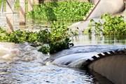 Đắk Nông: Tắm trên đập tràn, hai em nhỏ bị đuối nước