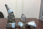 Mức án 13 tháng tù giam vụ buôn lậu sừng tê giác là chưa thích đáng