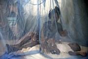 Norvatis chi 100 triệu USD nghiên cứu chữa bệnh sốt rét